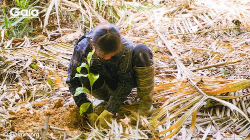 Một người dân địa phương đang tập trung trồng cây