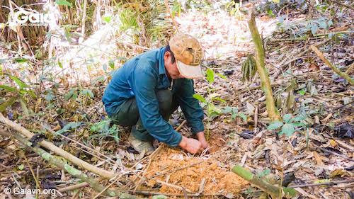 Người dân địa phương chính là lực lượng trực tiếp trồng cây tại các khu rừng - Ảnh chụp tại rừng Bến En