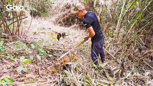 Người nông dân hăng hái đào hố trồng rừng - Ảnh chụp tại VQG Bến En
