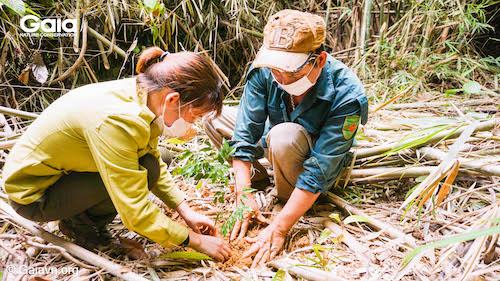 Một người dân địa phương và cán bộ VQG Bến En (Bên trái) cùng nhau vun trồng một cây xanh - Góp phần ngăn đại dịch tiếp theo!