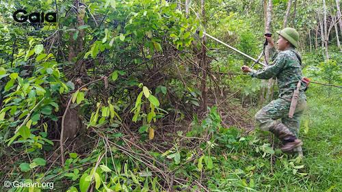 Phát quang, thực bì trước khi tiến hành trồng rừng - Ảnh chụp tại Rừng Xuân Liên