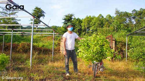 Những cây giống xanh tươi đang sẵn sàng được chuyển đến khu rừng Xuân Liên