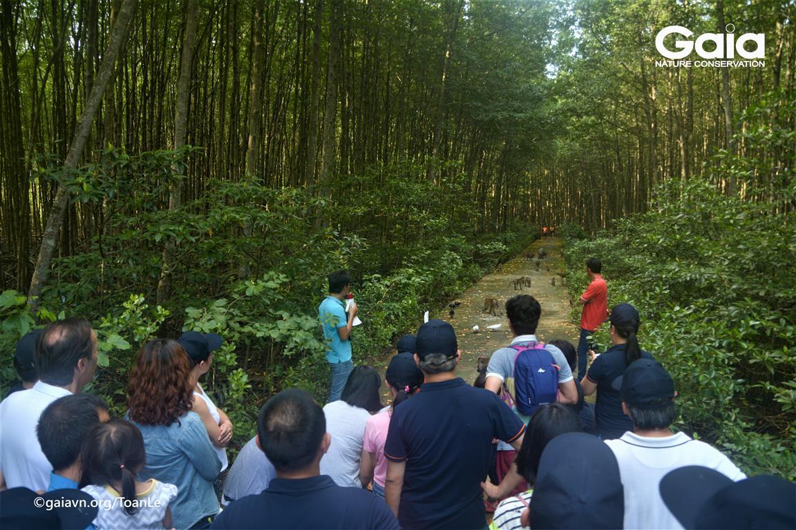 Nghe giới thiệu về rừng ngập mặn