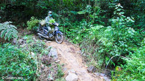 hoàn tất vận chuyển 5,600 cây giống đến khu rừng Xuân Liên, người dân phải di chuyển nhiều đợt bằng xe gắn máy qua nhiều con dốc hiểm trở.