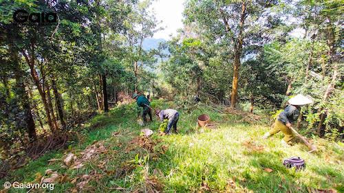 Hơn 7,5 hecta rừng đã được 13 người dân địa phương và các cán bộ Khu bảo tồn Thiên nhiên Xuân Liên trực tiếp trồng, với sự giám sát của Gaia.