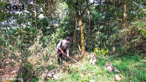 Người dân cùng đào hố trồng cây tại rừng Xuân Liên
