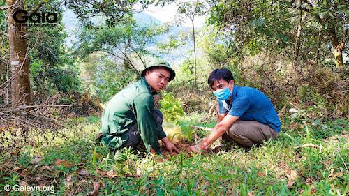 Khẩn trương trồng rừng Xuân Liên