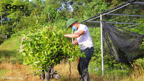 Vận chuyển cây giống đến Khu bảo tồn thiên nhiên Xuân Liên