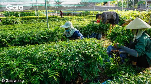 Cùng nhau phân loại để vận chuyển các cây giống phù hợp tới địa điểm trồng