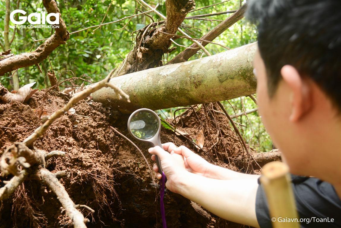 Trải nghiệm nghiên cứu dấu vết động vật rừng Bù Gia Mập.