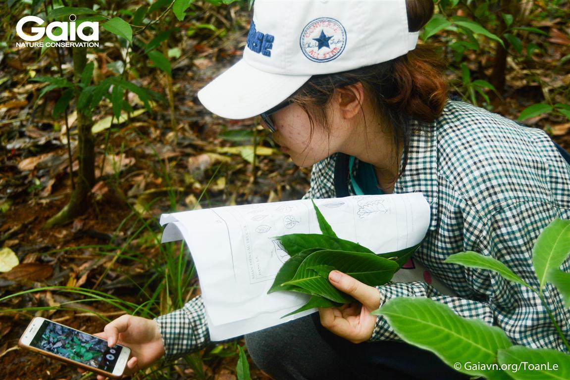 Nghiên cứu lá cây rừng