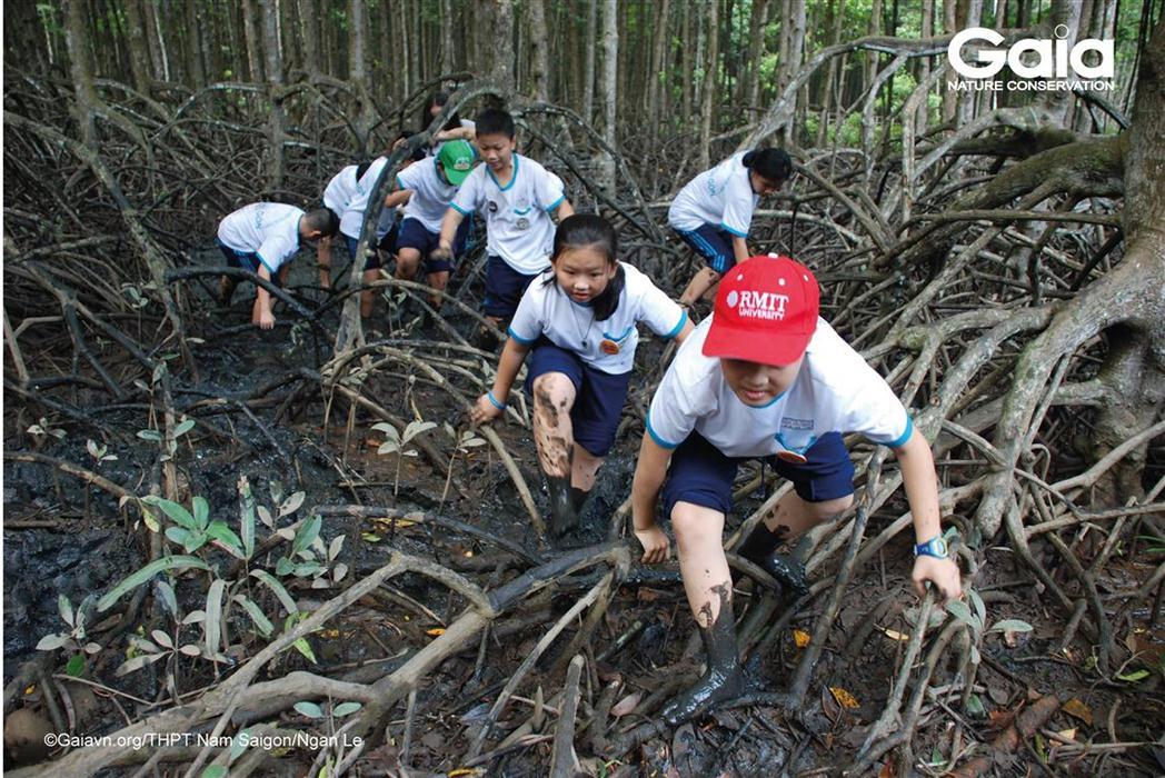 Học sinh thực hiện các thử thách lội bùn, mò ốc trong rừng ngập mặn