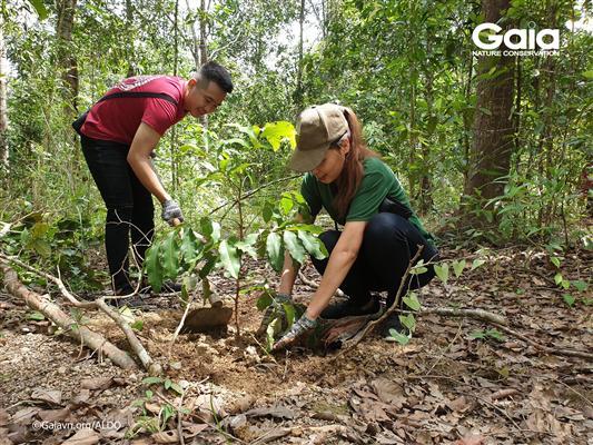 Trồng cây Chôm chôm rừng làm thức ăn cho động vật hoang dã.