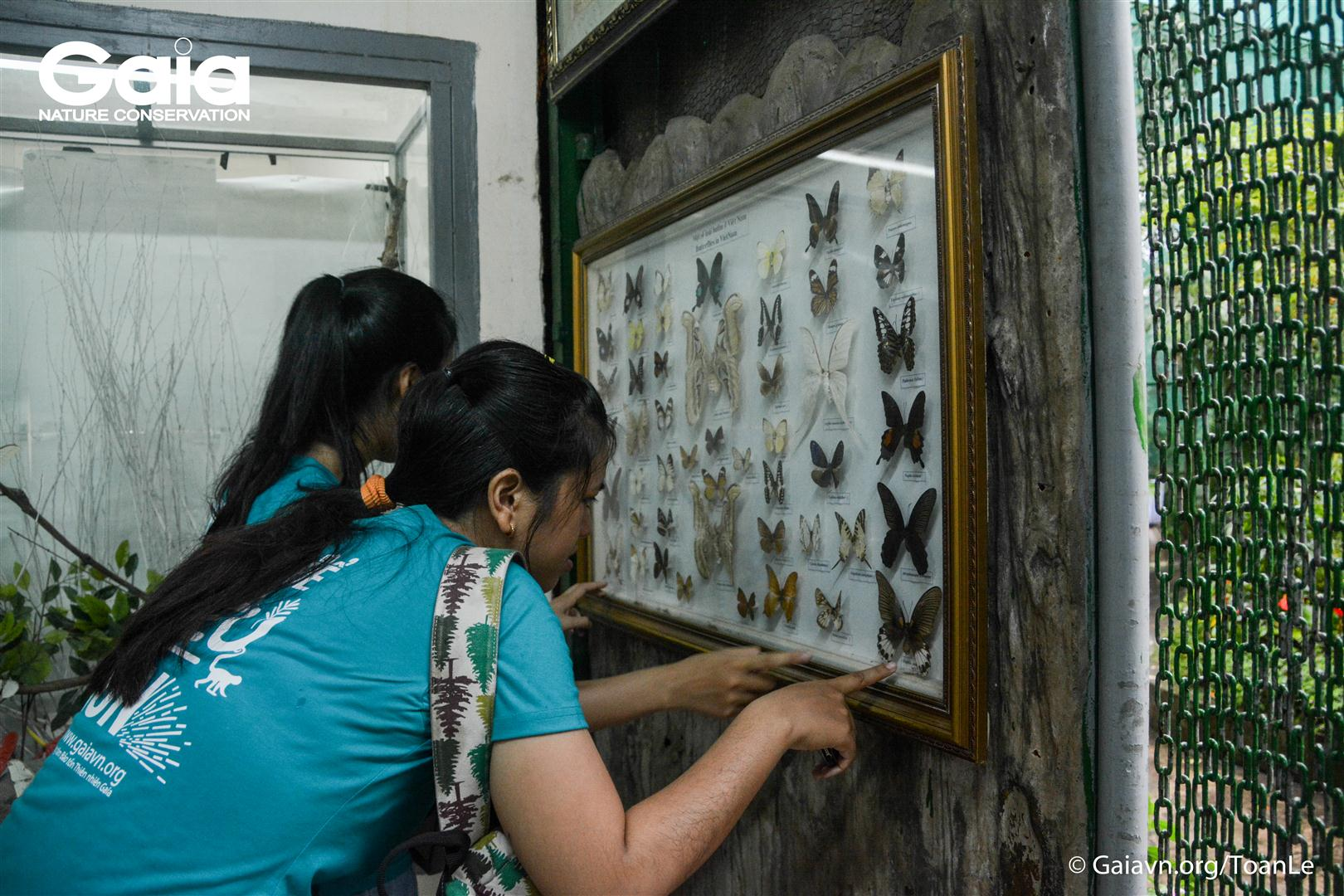 Quan sát tiêu bản các loài bướm phổ biến tại Việt Nam.
