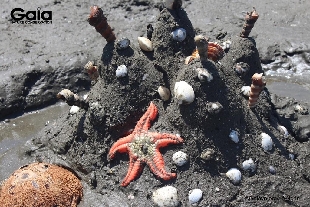 Một mô hình trang trí bằng các loài sinh vật biển.