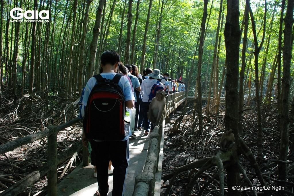 Tìm hiểu rừng đước và Khỉ đuôi dài