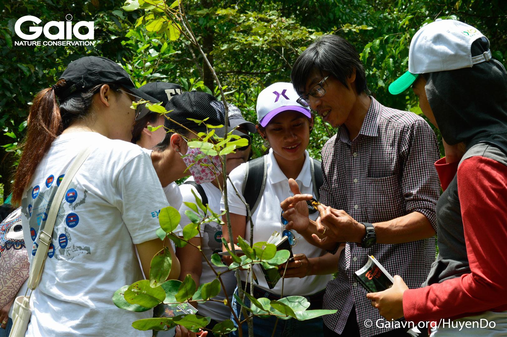 Điều tra số loài bướm trong rừng