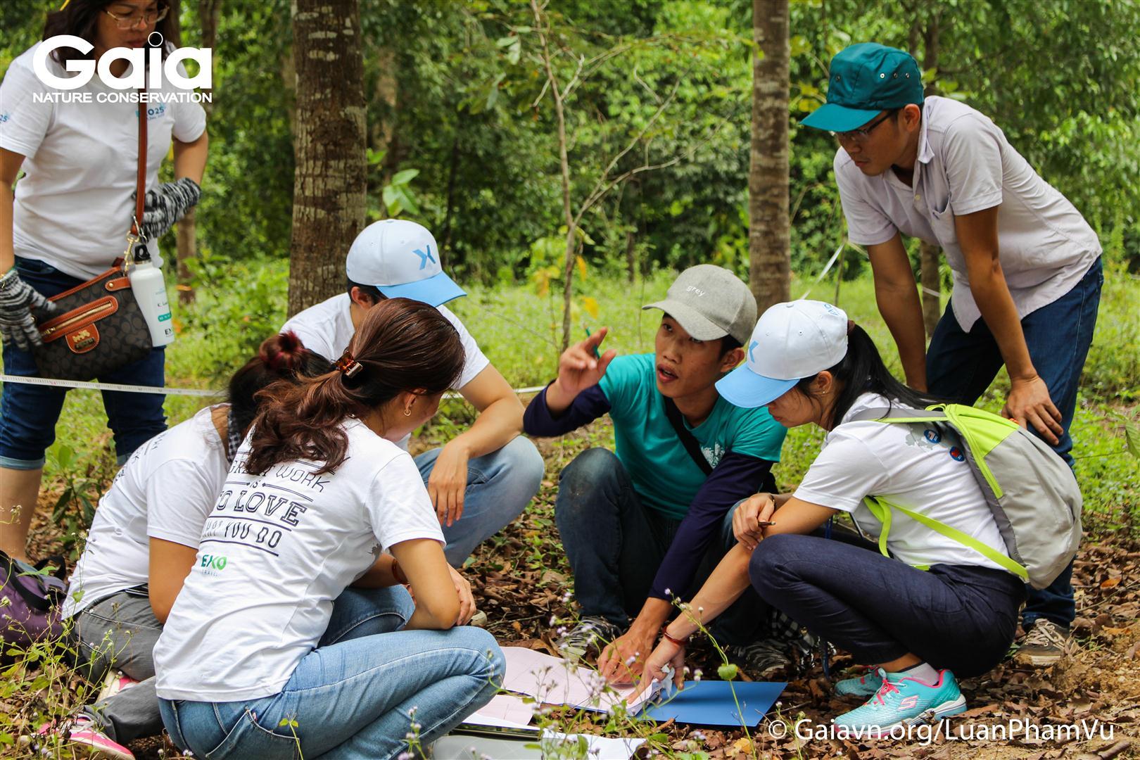 Nghiên cứu tán rừng