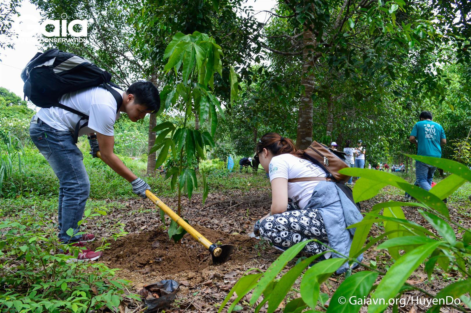 Hăng say trồng cây làm giàu rừng.