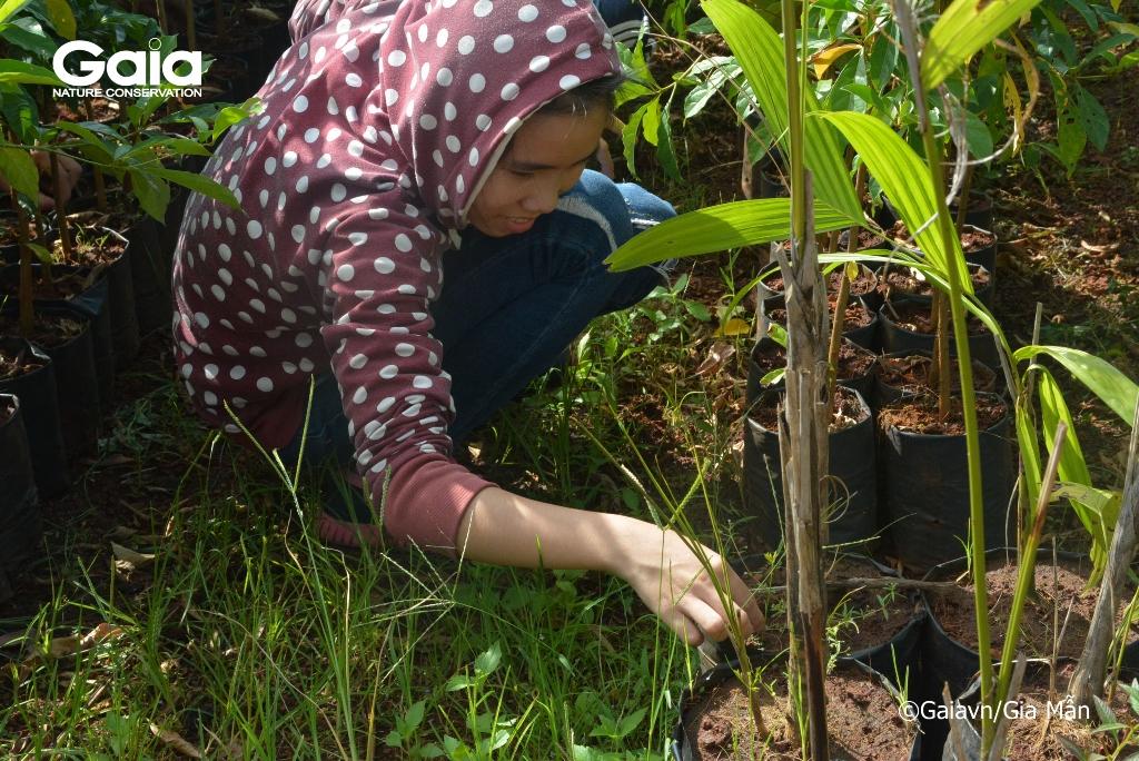 Học sinh nhổ cổ tại Vườn ươm cây rừng