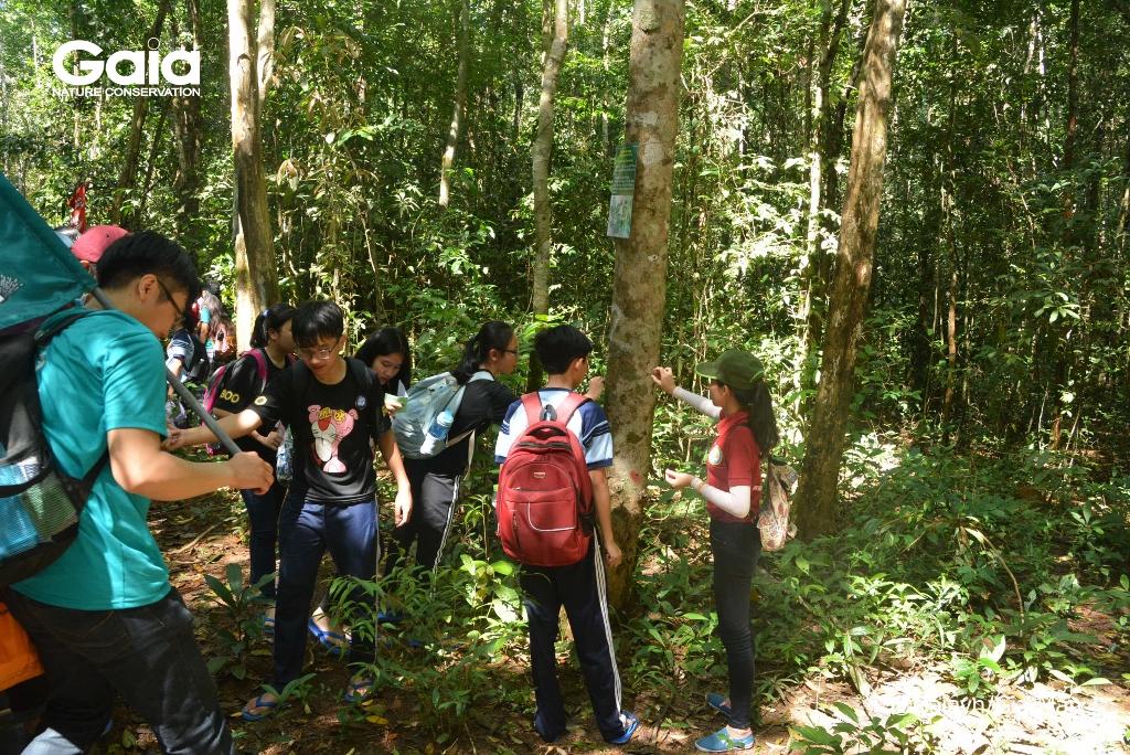Học sinh tìm hiểu các loài địa y mọc bám trên thân cây rừng.