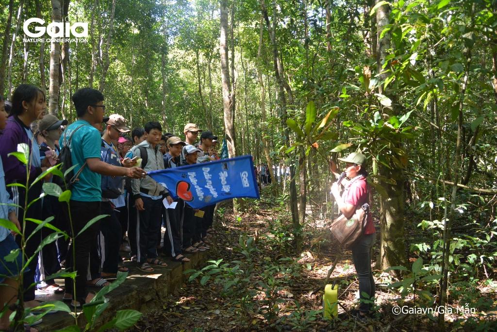 Tìm hiểu cây Trung quân và các loài cây quý hiếm trong rừng.